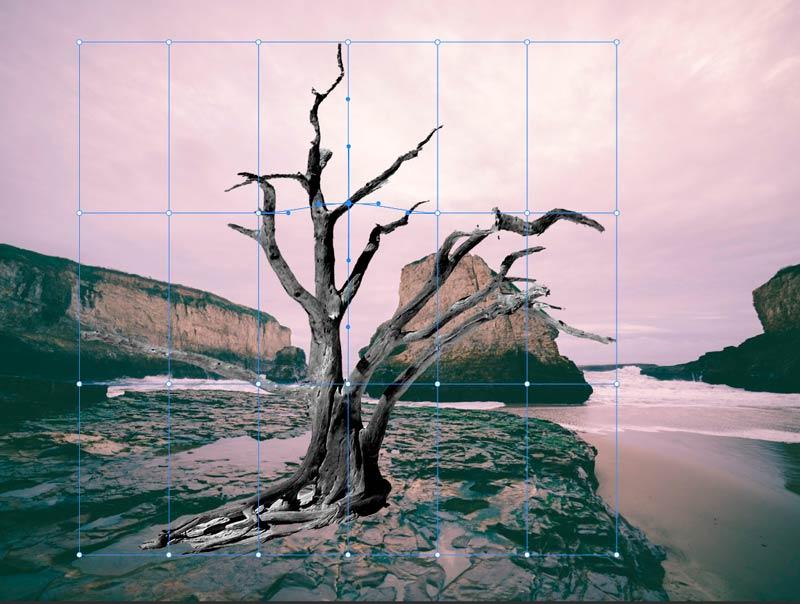 Strumento-Altera-in-Photoshop-CC-2020_1