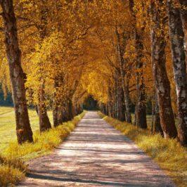 Creare i colori dell'autunno con Affinity Photo