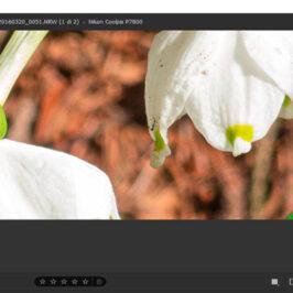 Adobe Camera Raw Super Resolution